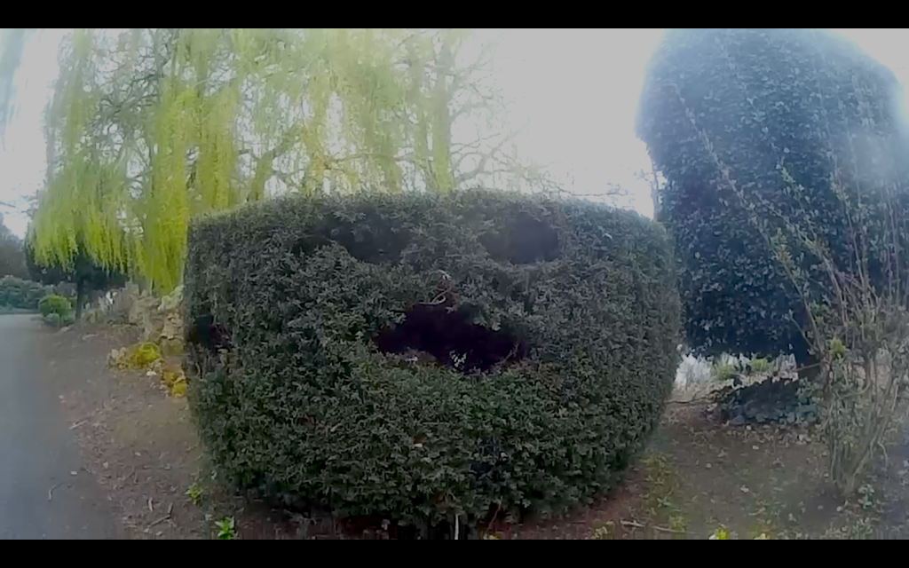 Amusing bush in Abbey Park